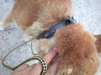迷い犬首輪