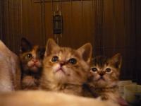 飼い主さん募集子猫