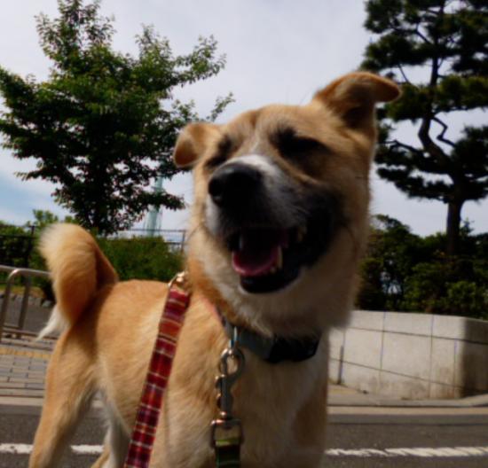さんぽ13_convert_20140522174714