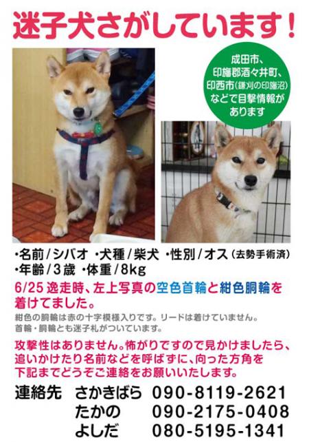 シバオ捜索_convert_20140718175147