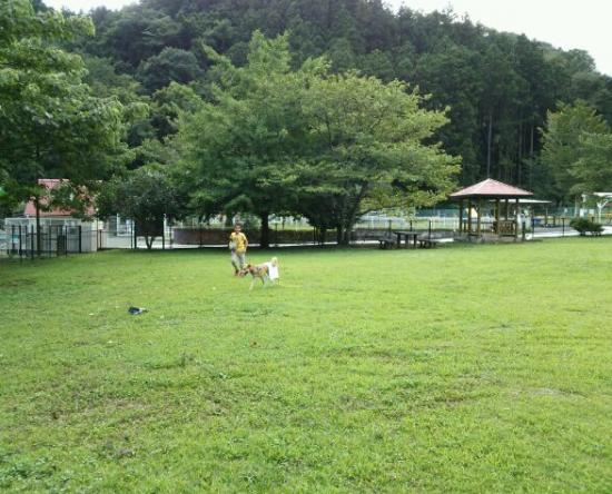 コブちゃん4_convert_20140904090453