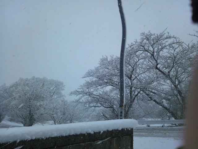 一面 雪景色