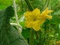 雨でも花の写真