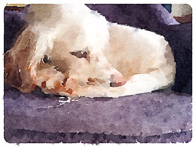 Waterlogue-2.jpg