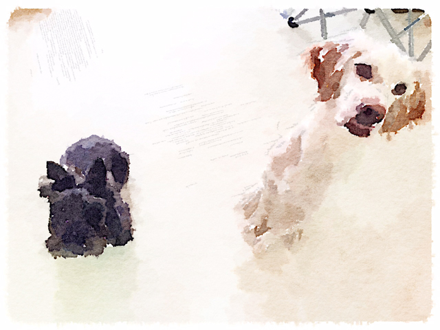 Waterlogue_20140417105525cd1.jpg