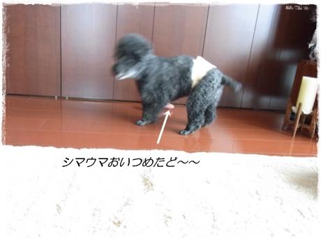 RIMG8781.jpg