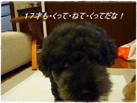 RIMG9334.jpg