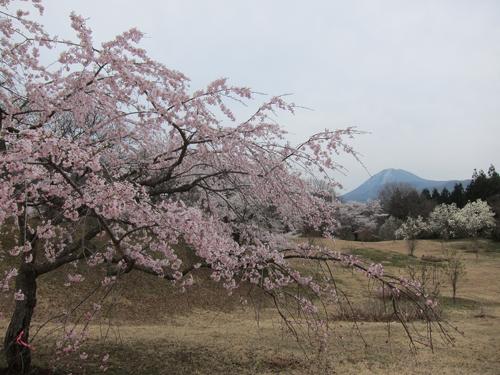 2014-04-28_9925.jpg