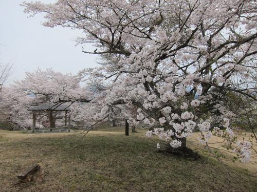 2014-04-28_9930.jpg