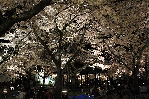 恒例夜桜ツアー052