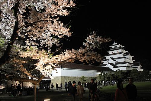 恒例夜桜ツアー051