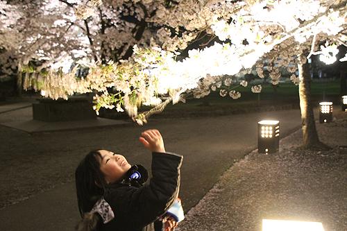 恒例夜桜ツアー056