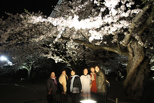 恒例夜桜ツアー055