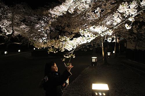 恒例夜桜ツアー057