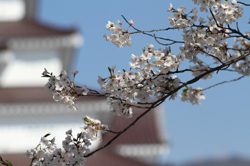 鶴ヶ城424-005