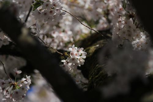 鶴ヶ城424-012