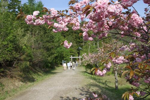 観音沼森林公園 2014 5 24015
