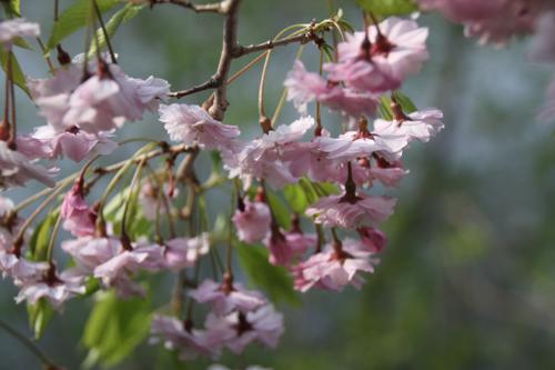 観音沼森林公園 2014 5 24023