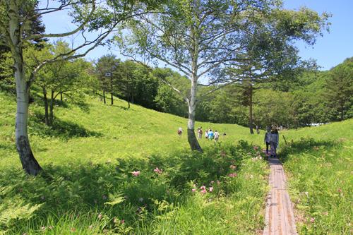 高清水自然公園ヒメサユリ626 02