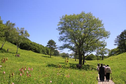 高清水自然公園ヒメサユリ626 10
