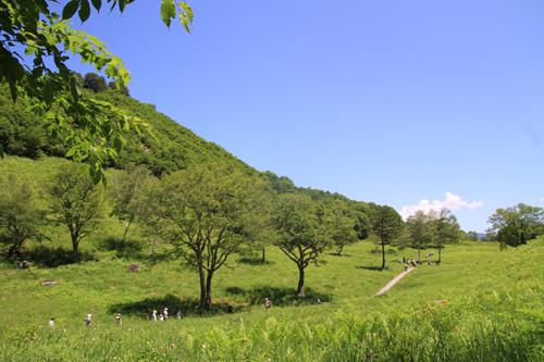 高清水自然公園ヒメサユリ626 09