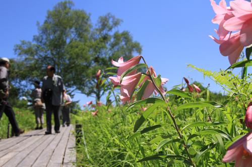 高清水自然公園ヒメサユリ626 11