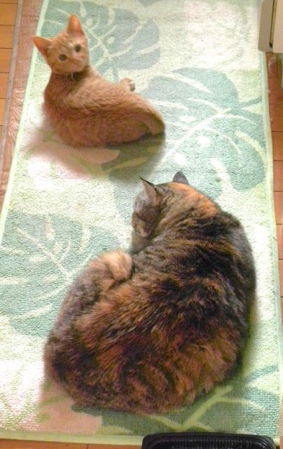 cat-day2014.jpg