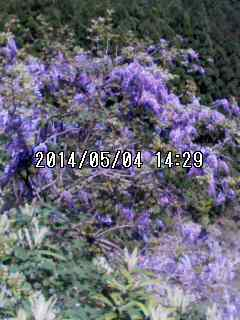 140504_1429~001