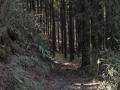 ハイキングコース1