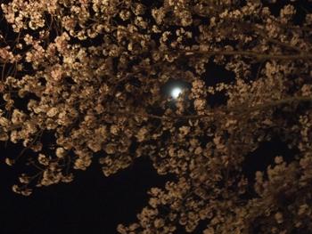 P4074506桜