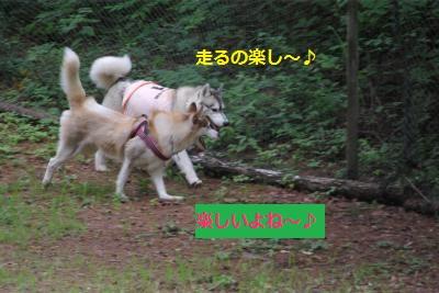 IMGP6713_convert_20140722144904.jpg
