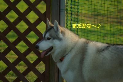 IMGP6784_convert_20140802174624.jpg