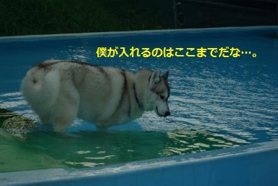 IMGP6794_convert_20140802174929.jpg