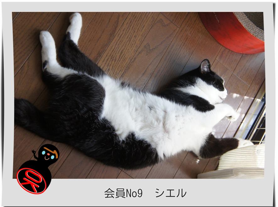 No9シエル