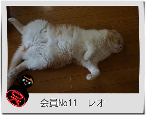 No11レオ