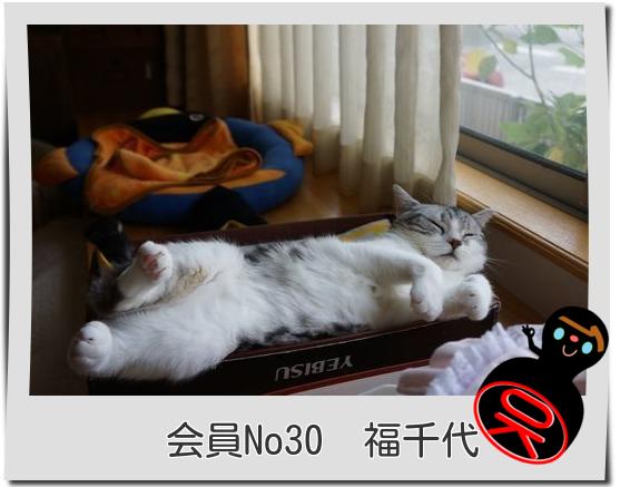 No30福千代