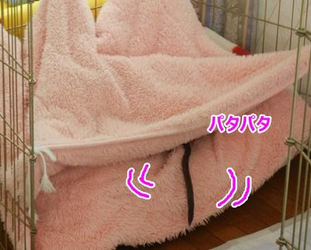 DSCN5824.jpg