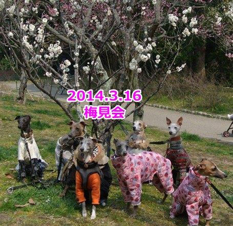 DSC_5857_20140325225348272.jpg