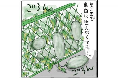 kaki_m_うり_convert_20140707215435