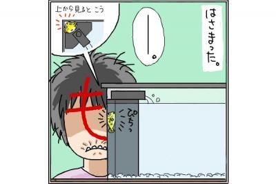 kaki_m_ふぐ4_convert_20140710005431