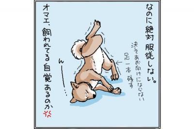 kaki_m_トノ4_convert_20140715231521