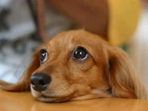 犬の画像1