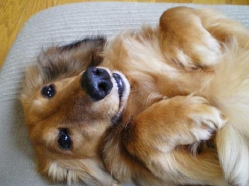 犬の画像2