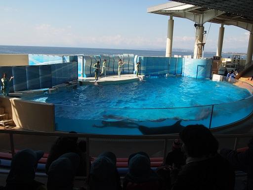 20140308江の島水族館イルカショー
