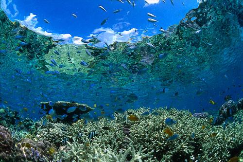 慶良間諸島サンゴ