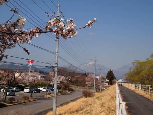 花見桜の枝と男体山