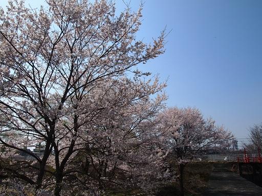 花見桜並木