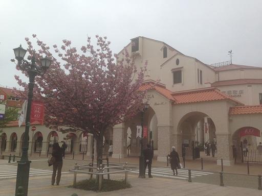 宝塚大劇場前八重桜