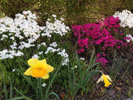 リバーサイド前の花