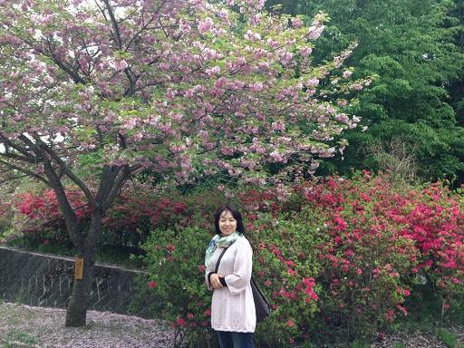 ぼたん桜よしちゃん